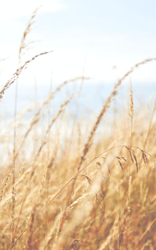 Alergia – objawy, przyczyny i leczenie