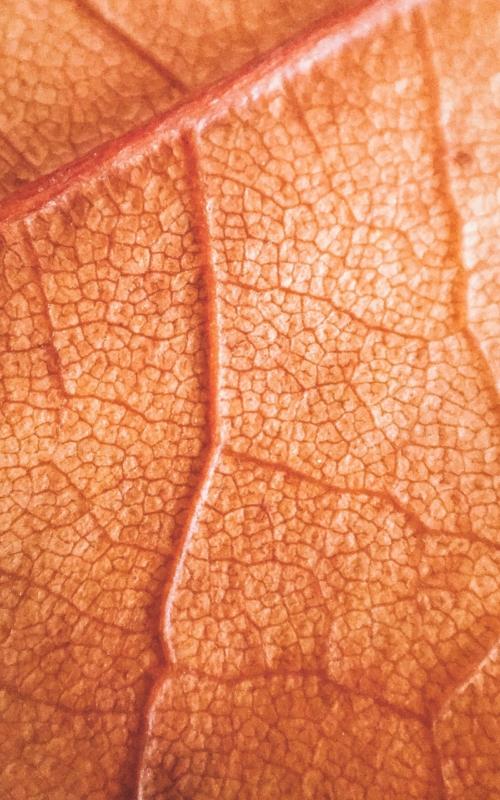 Regeneracja skóry po lecie