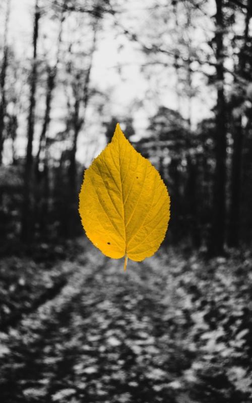 Jesienna chandra…